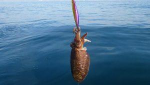 pesca de sepia en playa - Lista de los 10 mejores